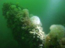 Vraget er fyldt med søanemoner